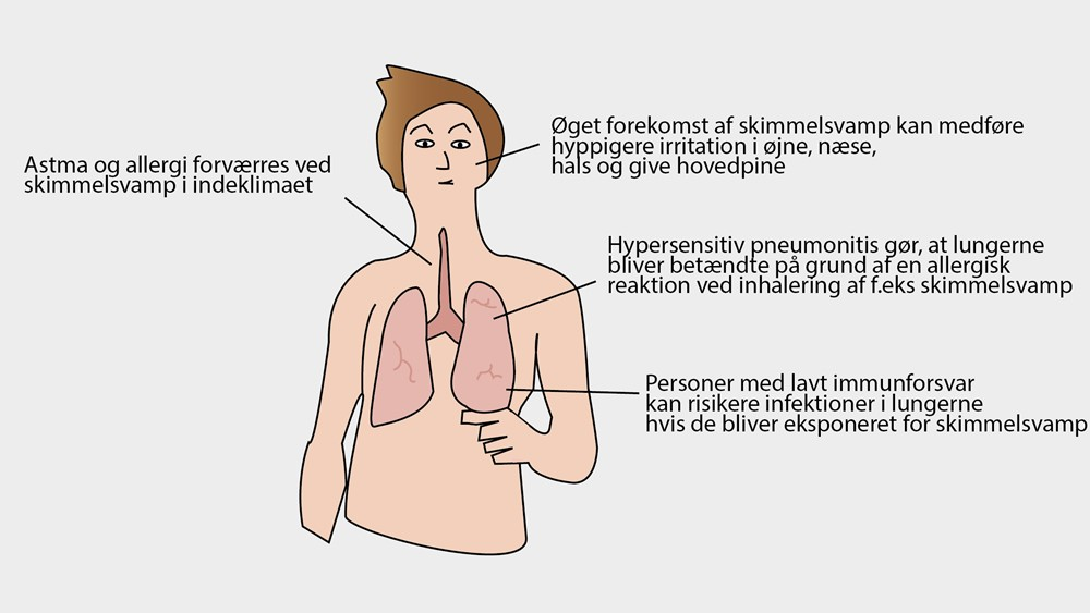 /media/7016/skimmelsvamp-er-farligt_1.jpg?center=0.48880597014925375,0.49392712550607287&mode=crop&quality=90&rnd=131037120900000000&mode=crop&heightratio=0.5625